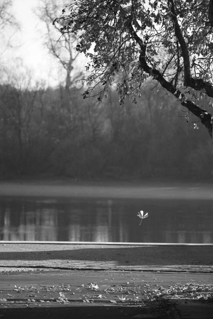 Szentendre, Dunakorzó, ősz, hulló falevél